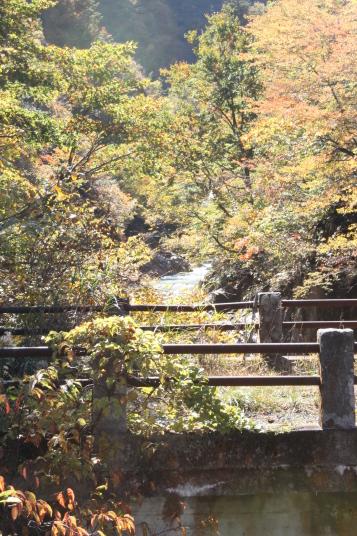 山の谷に大きめの川があり、両サイドに紅葉した葉がありました。なかなかに見ることのできない景色だったので、撮ってみました。