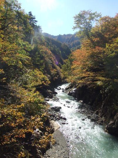 川の両端に樹木があり、それがとてもきれいに紅葉していました。