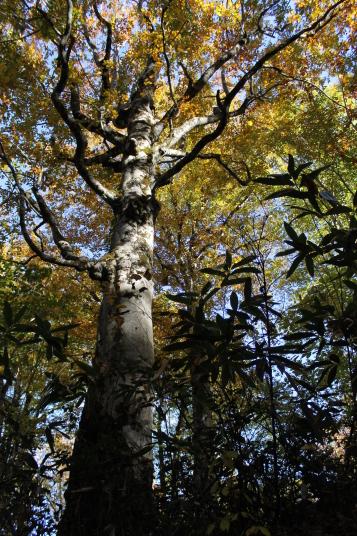 枝がたくさんあって、下から見たら、森の主のように感じました。