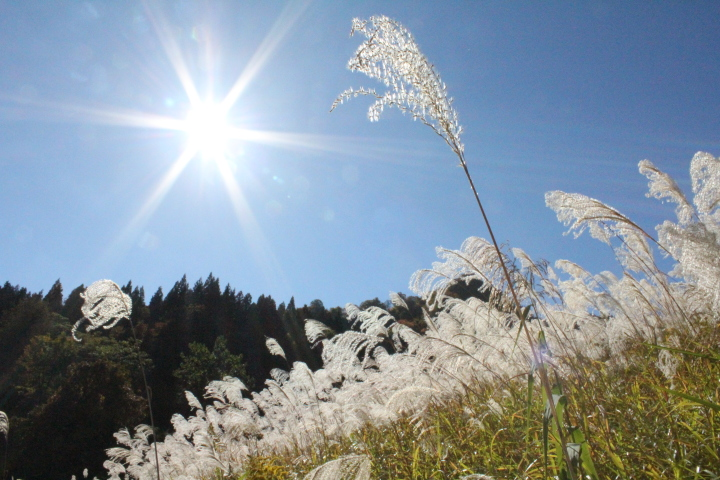 ススキを見ていると秋を感じるのですが、太陽がジリジリといろんなものを照らしていて、その対比がおもしろかったです。