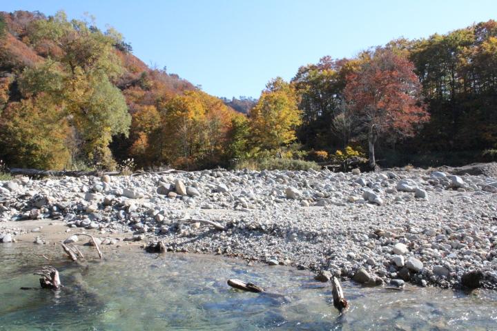 紅葉と川の水のきれいさに驚きました。水がとても澄んでいて、青く、冷たかったです。