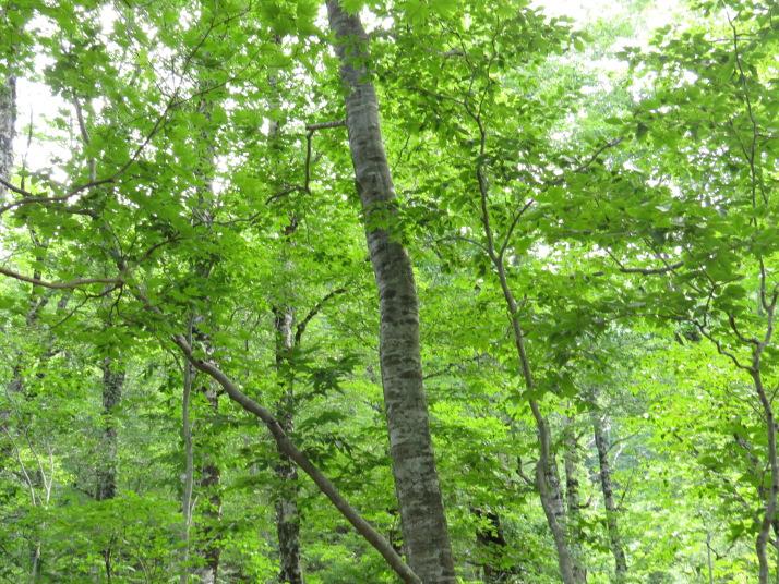 福島県側の道路脇に広がる森林を撮りました。森の中は涼しかったです。