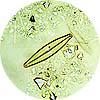プランクトン1